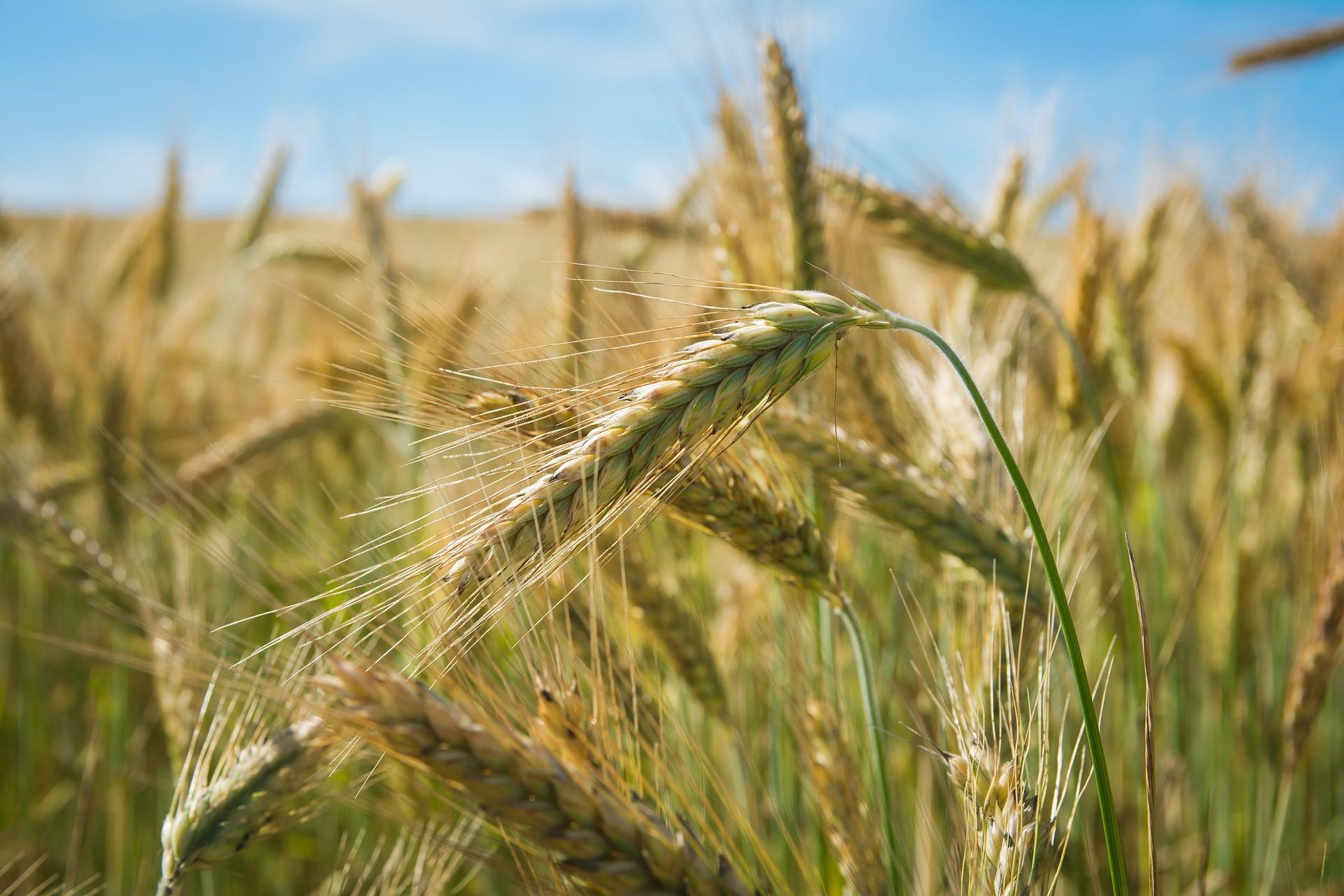 bild.landwirtschaft.klein